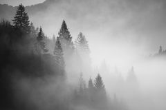 Black and white morning scenery. A forest almost covered by fog sitting in the morning Stock Images