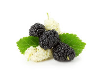 Black and white mulberry on the white background stock images