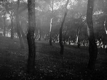 Black and white mysterious photo of dark trees stock photos