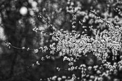 Black And White, Nature, Branch, Monochrome Photography Stock Photo