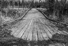 Black and White Nature Pathway 3872. Follow the path to your uncertain future. Take a nature hike. Relax in the woods royalty free stock image