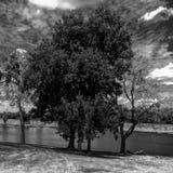 Black and white nature tree. Black and white nature scene tree outside Stock Photo