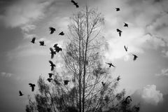Black and white-need someone. Pictures taken in the park, where the crows fly perched on a tree branch after a break. Life must continue even just alone Stock Photo