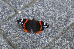 Black white and orange colored butterfly on stone ground Royalty Free Stock Photo
