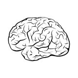 Black and white outline brain mark. Stock Images