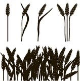 Black and white outline of wheat ears and wheat field, painting, vector Royalty Free Stock Photography