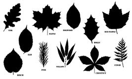Black and White Outlined Leaf Vector Design. Vector illustrations of the black silhouette outlines of different types of leaves isolated on a white background Stock Image