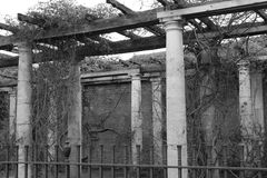 Black and White Overgrown Columns Royalty Free Stock Photo