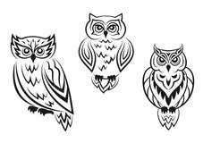 Black and white owl bird tatoos Stock Photo