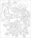 Black and white page for coloring. Fantasy drawing of peacocks couple. Worksheet for children and adults. Royalty Free Stock Photo