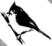 Black and white paint draw cardinal bird vector illustration. Black and white linear paint draw cardinal bird vector illustration Stock Images