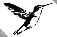 Black and white paint draw eagle hummingbird vector illustration stock illustration