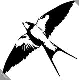 Black and white paint draw swallow bird vector illustration. Black and white linear paint draw swallow bird vector illustration stock illustration
