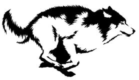 Black and white paint draw wolf illustration Royalty Free Stock Photography