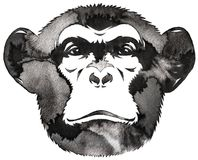 Black and white monochrome painting with water and ink draw monkey illustration Royalty Free Stock Photo