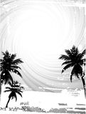 Black and white palm trees Royalty Free Stock Photo