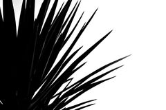 Black & White - palmtree. Black & White image of a palmtree. White background royalty free stock photography