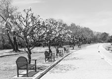 Black and white park. With chairs and trees stock image