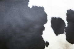 Black and white pattern on hide on side of cow Stock Photos
