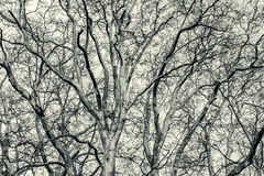 Black and white pattern of tree branches Stock Photos