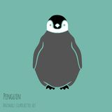 Black and white penguin Stock Images
