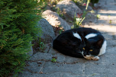 Black and white pet cat is lying on the garden path Stock Photography