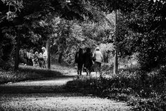 Black and White Photo of 3 Woman Walking in Forest Royalty Free Stock Image