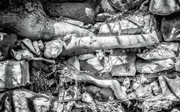 Tree roots sprout throgh big gray stones stock images