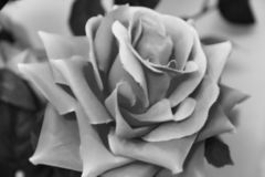 black and white photo of a big beautiful artificial rose stock images
