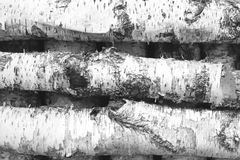 Black and white photo of birch logs Royalty Free Stock Photos