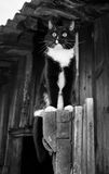 Black and white photo. Black and white cat is sitting on wooden door of old wooden house. Stock Photo