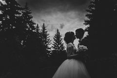 Black and white photo of bride  groom silhouettes kissing on nature background Royalty Free Stock Photography