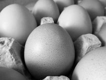 Black and white photo of brown eggs in egg carton Stock Photography