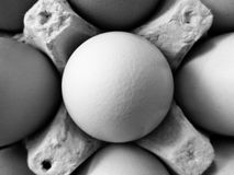 Black and white photo of brown eggs in egg carton Stock Photo