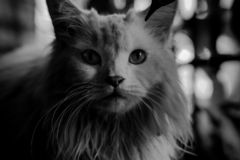 Black and white photo of cat royalty free stock images