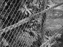 BLACK AND WHITE PHOTO OF CHAIN-LINK FENCE Stock Photo