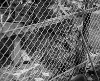 BLACK AND WHITE PHOTO OF CHAIN-LINK FENCE Royalty Free Stock Photos