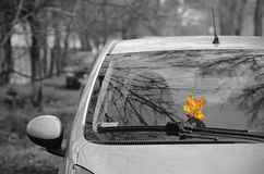 Black and white photo with color autumn leaf Stock Image
