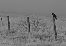 Black and White photo of crow sitting on fence post. On the edge of a field on a foggy frosty morning Stock Photos