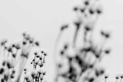 Dry plants in snow. Royalty Free Stock Photography