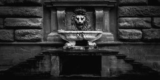 Black and white photo of a Florence lion fountain.  royalty free stock photography
