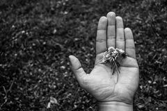 Black and white photo of hand holding flowers. Close up of a hand holding white flowers. Black and white photo with an unfocused background Stock Photography