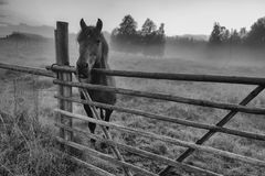 Black and white photo of  horse is standing in foggy paddock Stock Photos