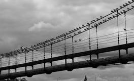 Seagulls on the bridge. Black and white photo of many seagulls sitting on the bridge royalty free stock photos