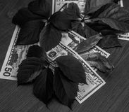Black and white photo of money dollars in the autumn motive stock photo