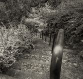 Old stairs and iron handrail. Black and white photo of plants old stairs and iron handrail in Royal botanic garden in Melbourne, Australia royalty free stock photos