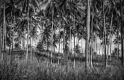 Palm trees plantation Royalty Free Stock Photos