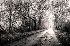 Black and white photo of a road surrounded my trees with light a Royalty Free Stock Photo