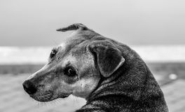 Black and white photo of a sad dog. With copy space Stock Image