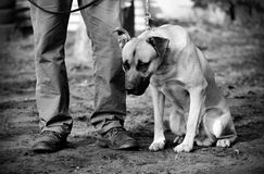 Black and white photo of a sad dog Royalty Free Stock Images